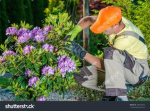 stock-photo-professional-caucasian-gardener-taking-care-of-flowers-in-the-garden-professional-landscaping-446556340