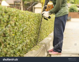 stock-photo-the-gardener-is-trimming-branches-581438512